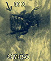 JPEG - 13 kb